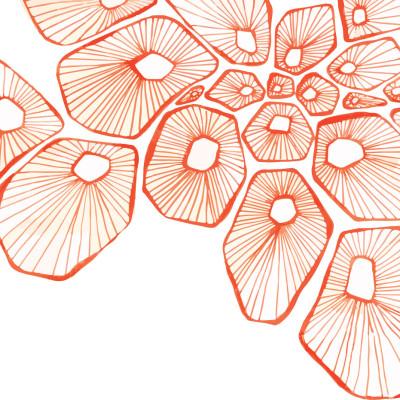 Barnacles_orange